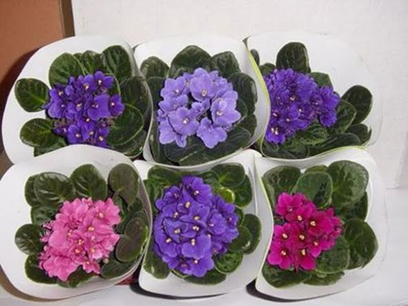 Kategori ev dekorasyon etiket en güzel saksı çiçekleri saksı