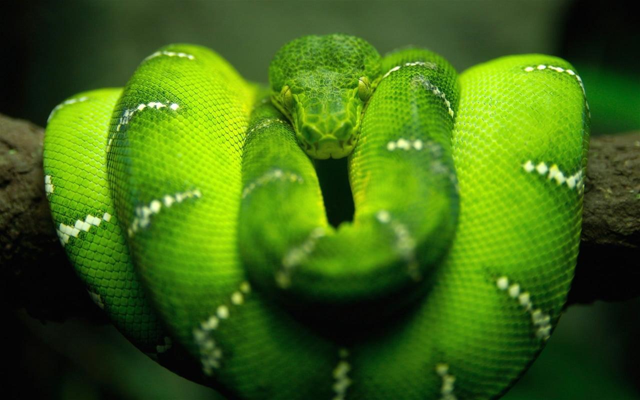 Rüyada yılan görmek diyanet ile Etiketlenen Konular